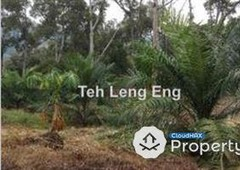 agricultural land for sale at 37.68 acres oil palm land